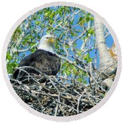 An Eagle In Its Nest  Round Beach Towel
