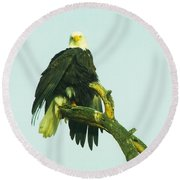 An Eagle Shaking It Off Round Beach Towel