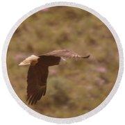 An Eagle Turns  Round Beach Towel
