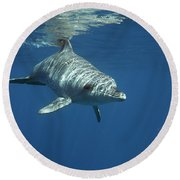 An Indo Pacific Bottlenose Dolphin Round Beach Towel