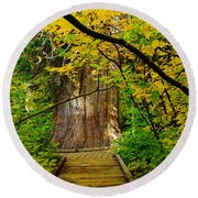 An Old Growth Douglass Fur In The Grove Of The Patriarches Mt Rainer National Park Round Beach Towel