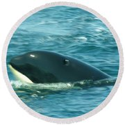 An Orca Surfaces  Round Beach Towel