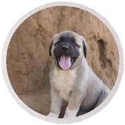 Anatolian Shepherd Puppy Round Beach Towel