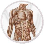 Anatomy Of Human Abdominal Muscles Round Beach Towel