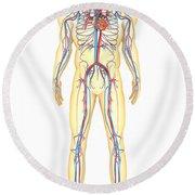 Anatomy Of Human Body And Circulatory Round Beach Towel by Stocktrek Images