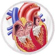 Anatomy Of Human Heart, Cross Section Round Beach Towel