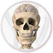 Anatomy Of Human Skull, Cutaway View Round Beach Towel