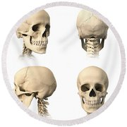 Anatomy Of Human Skull From Different Round Beach Towel
