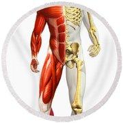 Anatomy Of Male Body With Half Skeleton Round Beach Towel