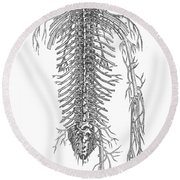 Anatomy: Spinal Nerves Round Beach Towel