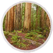 Ancient Forest - The Massive Giant Redwoods Sequoia Sempervirens In Redwood National Park. Round Beach Towel