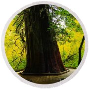 Ancient Old Growth Round Beach Towel