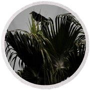 And A Crow Oh Oh In A Palm Tree Round Beach Towel