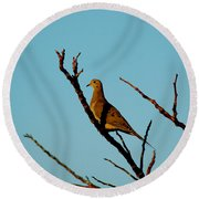 And A Dove In A Tree Round Beach Towel