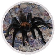 And Along Came A Little Spider .  Round Beach Towel