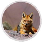 Andean Fox Portrait Round Beach Towel