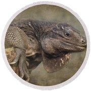 Anegada Ground Iguana - Houston Zoo Round Beach Towel