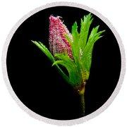 Anemone Flower Details Round Beach Towel