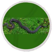 Anerythristic Red Belly Snake Round Beach Towel