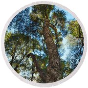 Angeles Sun -beautiful Tree With Sunburst In Angeles National Forest In The San Gabriel Mountails Round Beach Towel