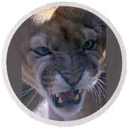 Angry Florida Panther Round Beach Towel
