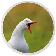 Angry Red Billed Gull Round Beach Towel