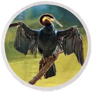 Anhinga Drying His Wings Round Beach Towel