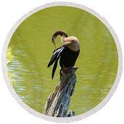 Anhinga Grooming Feathers Round Beach Towel