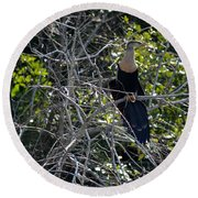 Anhinga In Brush Round Beach Towel