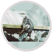 Anhinga Or Snakebird Round Beach Towel
