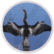 Anhinga  Sunbathing Round Beach Towel