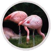 Animal - Flamingo - A Set Of Flamingoes Round Beach Towel