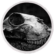 Animal Skull Round Beach Towel