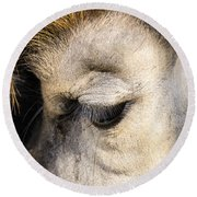 Animals Can Be Beautiful Round Beach Towel
