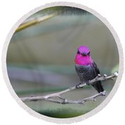 Anna's Hummingbird - Male Round Beach Towel