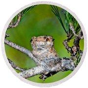 Annas Hummingbird Nest Round Beach Towel