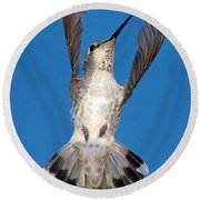 Anna's Hummingbird Tail Display Round Beach Towel
