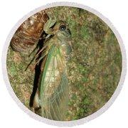 Annual Cicada Round Beach Towel