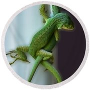 Anole Lovers Round Beach Towel