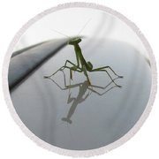 Another Young Mantis Round Beach Towel