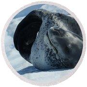 Antarctic Leopard Seal On Iceberg Round Beach Towel