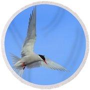 Antarctic Tern Round Beach Towel by Tony Beck