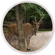 Antelope Behind A Tree Round Beach Towel