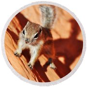 Antelope Ground Squirrel Round Beach Towel