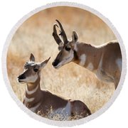 Antelope Love Round Beach Towel