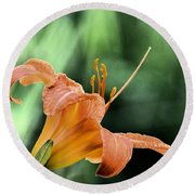 Anthers Aglow Round Beach Towel