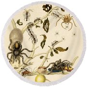Ants Spiders Tarantula And Hummingbird Round Beach Towel by Getty Research Institute