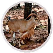 Aoudad Plus 2 Round Beach Towel