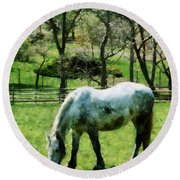 Appaloosa In Pasture Round Beach Towel