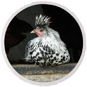 Appenzeller Just Hanging Out Round Beach Towel